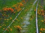 Flores y hierba cubriendo una vía de tren