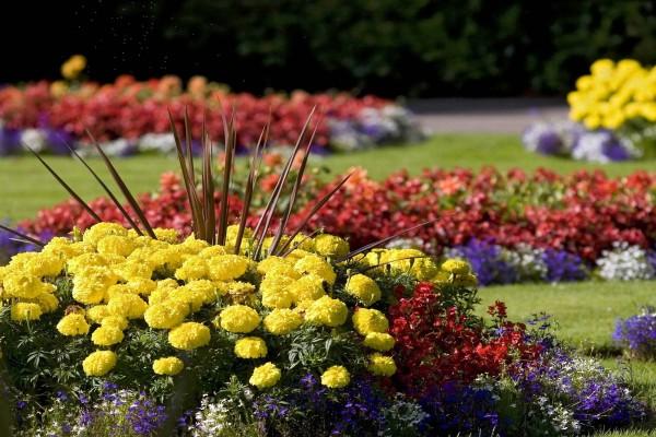 Flores y plantas en un jardín bien cuidado