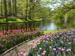 Un parque con bonitos tulipanes