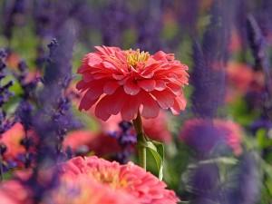 Una hermosa flor en un colorido jardín
