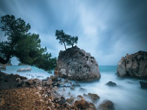 Postal: Rocas y árboles en el mar