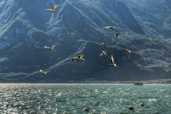 Un grupo de gaviotas vuela sobre el mar