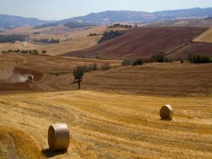 Trabajando en una campo de La Toscana
