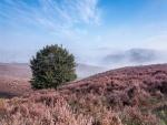 Un solitario árbol en la colina