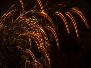 Postal: Pequeños destellos de luz en la hierba