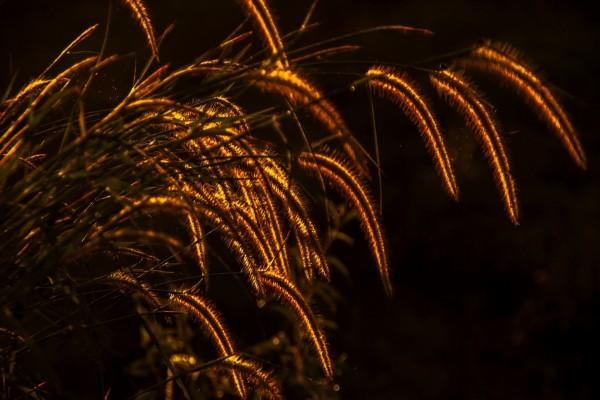 Pequeños destellos de luz en la hierba