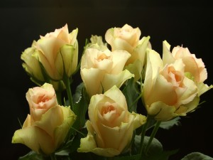Bellísimas rosas formando un ramo