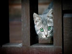 Un gatito curioso