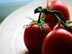 Tomates en rama bien maduros
