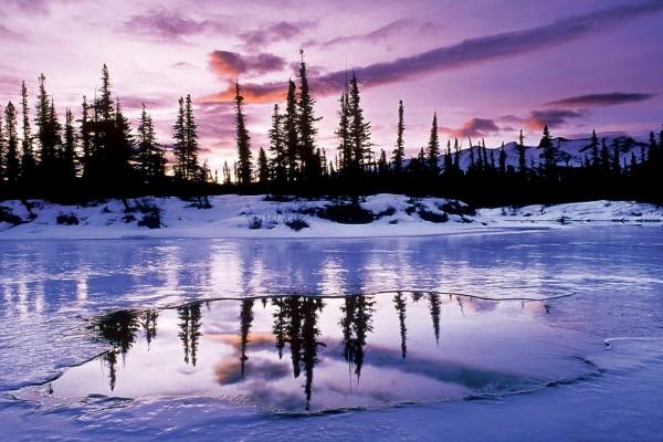 Pinos reflejados en el agua helada