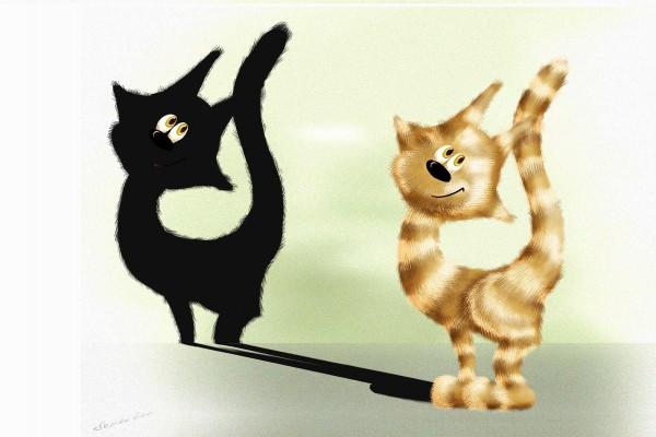 Un gato y su sombra