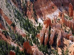 Árboles entre las formaciones rocosas