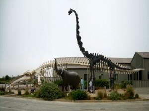 Esqueletos de diferentes dinosaurios