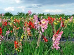 Campo con maravillosas flores