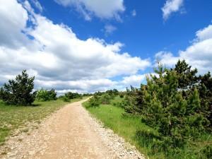 Carretera de tierra entre hierba y árboles