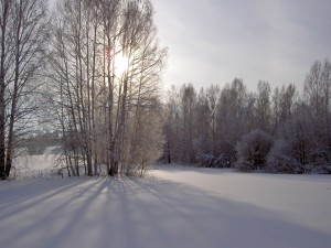La sombra de los árboles sobre la nieve
