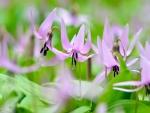 Flores color púrpura en primavera