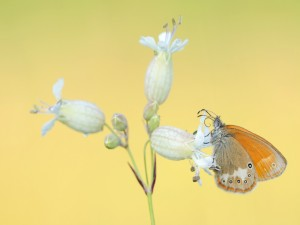 Postal: Una bella mariposa sobre una flor blanca
