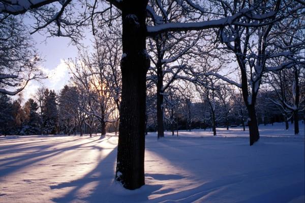 El sol brillando entre los árboles en un paraje nevado