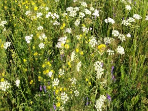 Flores y hierbas en el campo