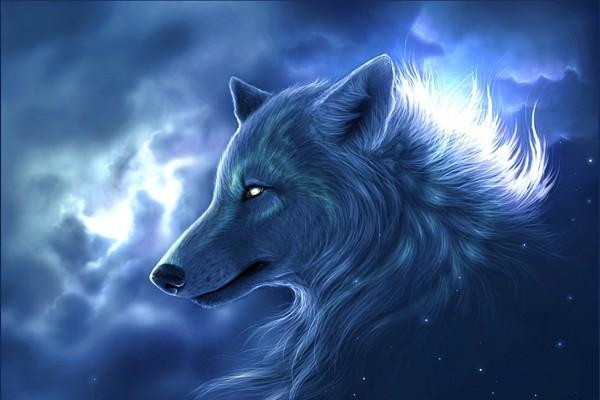 La cabeza de un gran lobo