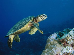 Tortuga marina nadando en el fondo del océano