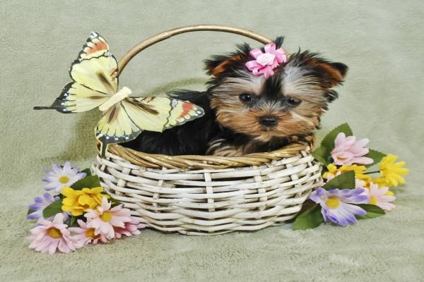 Tierno perrito en una canasta decorada con flores y una mariposa