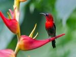 Maravilloso y colorido pájaro sobre una flor