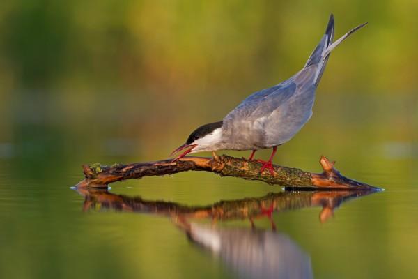 Pájaro sobre una rama en el agua