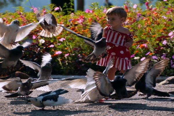 Una niña entre palomas