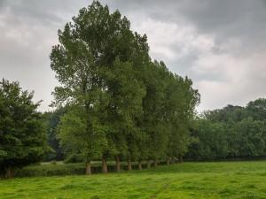 Postal: Grandes árboles embellecen el campo