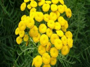 Postal: Conjunto de flores amarillas silvestres