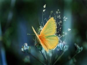 Una mariposa amarilla