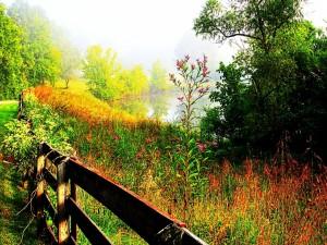 Postal: Brillo en los árboles de la orilla del lago