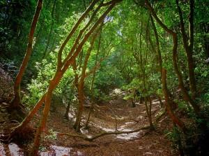 Árboles en Batán de Arriba (Tenerife)