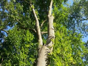 Un gran árbol con hojas verdes