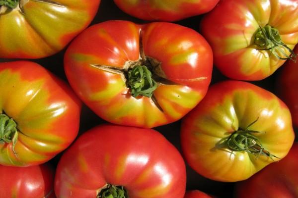 Hermosos tomates veraniegos