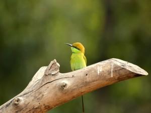 Pájarillo de lindos colores y largo pico