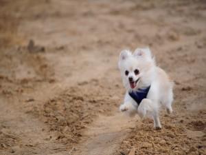 Postal: Alegre perrito corriendo por la arena