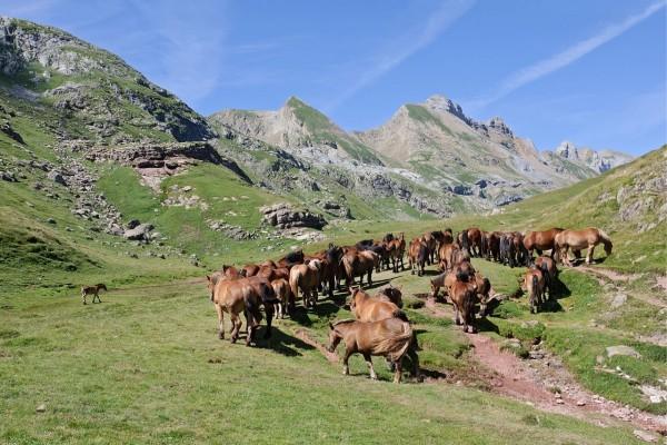Manada de caballos en los pastos de la montaña