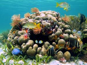 Fabulosos corales y peces en un mundo submarino