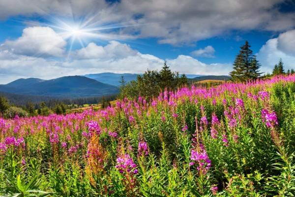 Los brillantes rayos del sol iluminan el campo cubierto de flores y árboles
