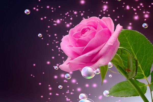 Elegante y delicada rosa rodeada de burbujas