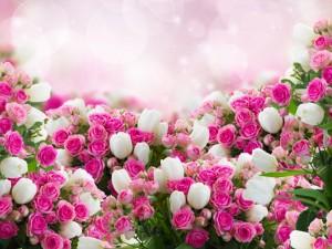 Conjunto de espléndidas rosas y tulipanes blancos