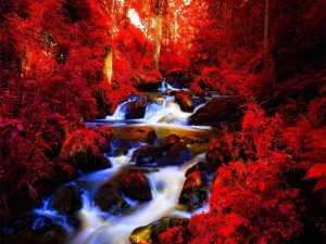 Río en el bosque rojo