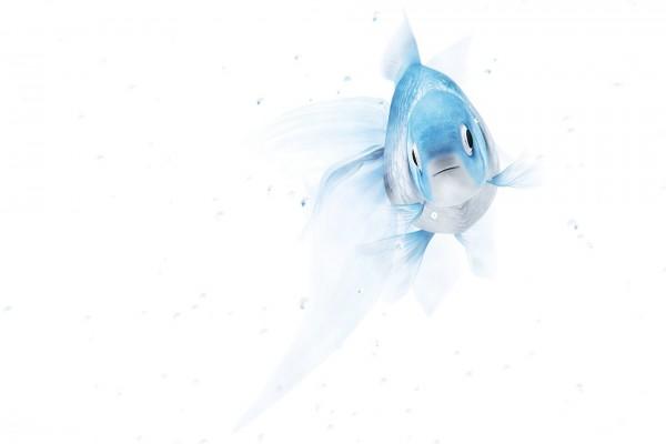 Un bonito pez azul y blanco