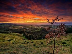 Postal: Últimos rayos de sol sobre la inmensidad de un campo