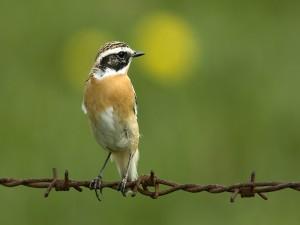 Pájaro posado en un alambre