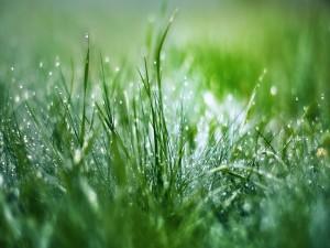 Postal: Gotas de agua sobre la verde hierba