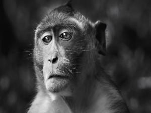 Un mono con semblante triste